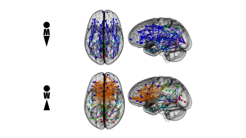 Collegamenti neurali cervelli sesso diverso